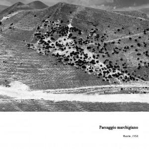 paesaggio_Paesaggio-marchigiano